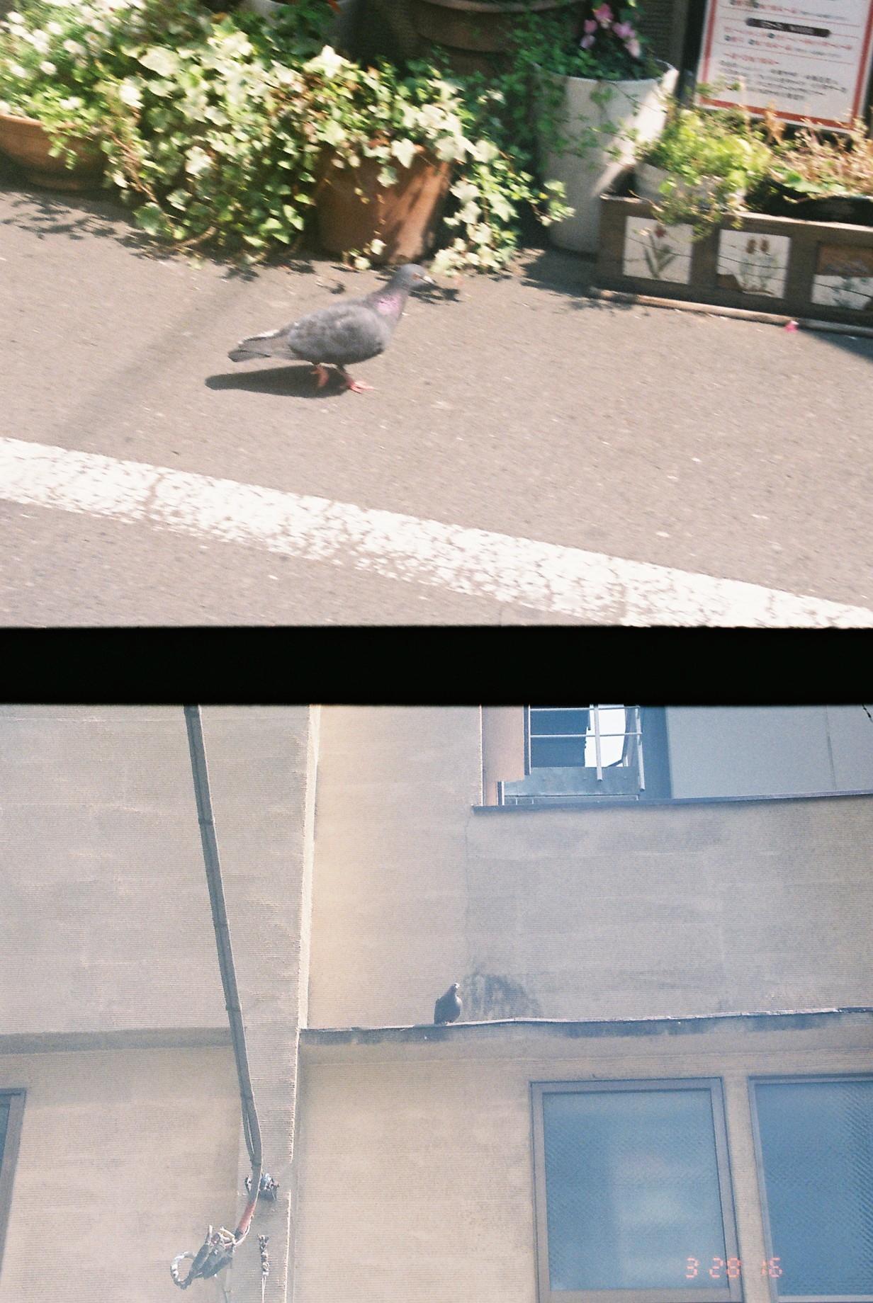【ハーフサイズカメラ】で写真を撮ってみた!